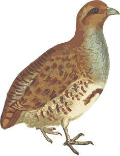07e8d1981afa9ea3be6cc2aced264031_big-image-png-partridge-bird-clipart_1839-2400.png (1839×2400)