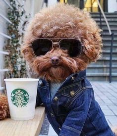 I don't always drink Starbucks but when I do I look incredibly cute. http://ift.tt/2eIVK9D