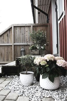 Lovely combination of materials and textures - potted hydrangea & olive tree, silvered decking & pebbles Hydrangea Potted, Potted Plants, White Hydrangeas, Balcony Garden, Garden Pots, Terrace, Dream Garden, Home And Garden, White Gardens