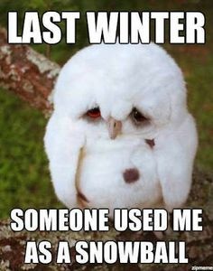 Last winter someone used me as a snowball