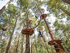 Screams of excitement and joy ring out from high in the branches at TreeTop Adventure Park as people from all ages experience the daring adventures on offer. Slide down flying foxes, move from tree to tree on suspension bridges and jump from liana up to 2 Sydney For Kids, Stuff To Do, Things To Do, Lembang, Scary Mommy, Top Travel Destinations, Adventure Activities, Tree Tops, Central Coast
