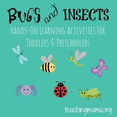 Preschool Bug Theme on Ladybug Life Cycle Activities Sensory