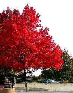 Fall colors near Somerville High School. DiscoverCentralHill.com