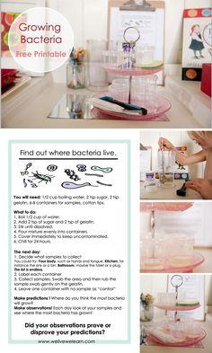 Growing Bacteria —Free Printable!