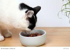 Es kann verschiedene Gründe geben, warum Deine Katze eine Diät benötigt. Lies hier welche: http://blib.it/2T
