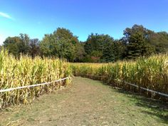 10 Picture Perfect Fall Day Trips To Take In Maryland