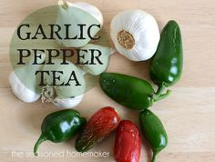 Garlic Pepper Tea a safe and natural way to kill insects in your garden. This natural pesticide recipe works quickly and is safe for pets and people.