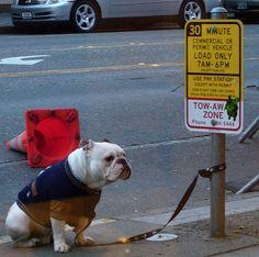 Funny Bulldog Photos