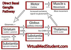 Website that explains basal ganglia really well. - Functional Neurology - Functional Neurologist