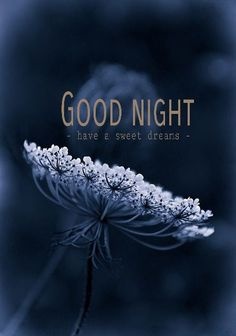 EXCLUSIVE collection of CRAZY & CREATIVE good night messages will delight your love. These good night my love will ignite affection towards each other. Good Night I Love You, Good Night Prayer, Good Night Blessings, Good Night Wishes, Good Night Sweet Dreams, Good Morning Good Night, Day For Night, Morning Msg, Night Qoutes