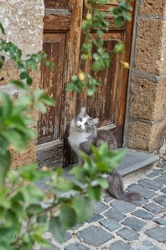 Cat-so irritated. Open this door...now!!!More cats, more Italy...click photo!