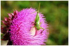 Imagini pentru delta dunarii imagini fauna Danube Delta, Plants, Planters, Plant, Planting