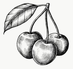 Tattoo Sketches, Tattoo Drawings, Drawing Sketches, Pencil Art Drawings, Easy Drawings, Hatch Drawing, Pineapple Drawing, Vegetable Drawing, Cherry Tattoos