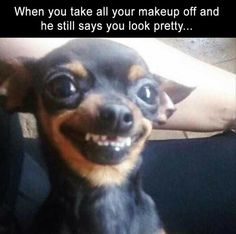 Funny Dogs That Will Make Your Day Source by wackyypics dog dog memes dog videos videos wallpaper dog memes dog quotes dogs dogs pictures dogs videos puppies puppy video Funny Animal Jokes, Really Funny Memes, Stupid Funny Memes, Cute Funny Animals, Funny Relatable Memes, Haha Funny, Cute Baby Animals, Funny Cute, Funny Dogs