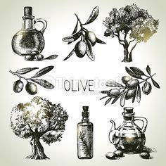 Vektorgrafik : Hand drawn olive set