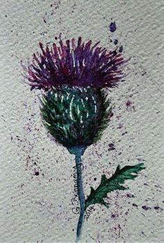 Thistle watercolour