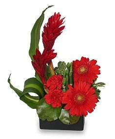 Black Square Ceramic Container Wet Floral Foam Foliage: Galax Leaves, Variegated Pittosporum, Sheet Moss Red Ginger Red Gerberas Red Ti Leaves Red Carnations Equisetum (Horsetail
