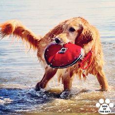 DOG OF THE DAY   Jul.04,2012 @larph