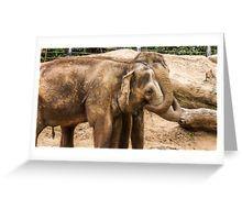 Pachyderm Pals Greeting Card