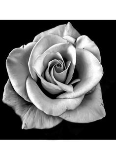 Rose Images, Rose Photos, Rose Drawing Tattoo, Tattoo Drawings, Indian Skull Tattoos, Realistic Tattoo Sleeve, Rose Flower Tattoos, Black And White Roses, Latest Tattoos