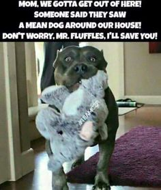 Pit Bull Puppies Pit Bulls and Itty Pitties Cute Funny Animals, Funny Animal Pictures, Funny Cute, Funny Dogs, Lmfao Funny, Hilarious Sayings, Funny Captions, Animal Pics, Dog Pictures