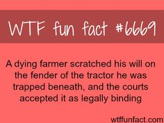 I wonder how many of these wtf facts are true. - Funny - Check out: WTF Fun Facts on Barnorama Wtf Fun Facts, True Facts, Funny Facts, Random Facts, Crazy Facts, Funny Quotes, Odd Facts, Strange Facts, Random Stuff
