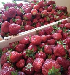 Annie's Strawberries for Jam
