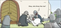 Pigeons celebrating a wedding