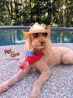 Wish you All Happy Weekend !!!  Visit Our Website For #OnlineShopping of #PetProducts - www.petencare.com