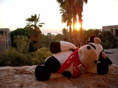 Moe enjoying the sunset at Mövenpick Resort & Spa Dead Sea