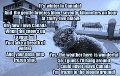 Canadian Humor: Canadian Winter hahaha the truth! Canadian Cat, Canadian Memes, Canadian Things, Canadian Winter, Canadian Humour, Canadian Girls, Alberta Canada, Calgary, Funny Animal Pictures