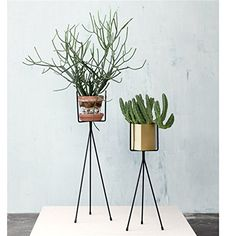Scan Trends 4117 Plant Stands - Plant Stand - Small W: 13 x H: 50 cm: Amazon.co.uk: Garden & Outdoors