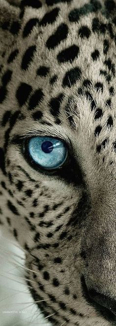 worlds-evolution: Leopard