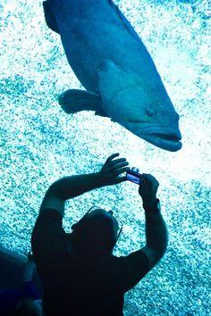 Este é o Oceanário de Lisboa. Construído e inaugurado em 98, é o segundo maior oceanário do Mundo e contém uma extensa coleção de espécies — aves, mamíferos, peixes e outros habitantes. A atração principal é sem dúvida o aquário central, com 5.000.000 de litros. Diferentemente de outros aquários que eu já tinha visitado, aqui as espécies coexistem, ou seja, vivem juntas assim como na natureza.
