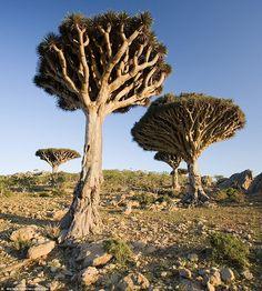 Socotra Archipelago