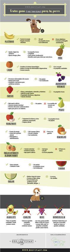 Frutas GUAU (y no tan guau) para tu perro. Una infografía de Dog Vivant en…