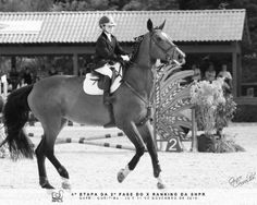 Maddie and Taffy 17.2hh, mostly jumps under 2'9ft, better with advanced riders, 19 years old colour- orange