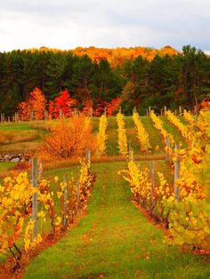 Michigan, wine country