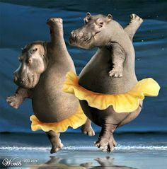 Funny Animals Dancing New Pictures 2012 Wild Animals Photos, Funny Animal Photos, Funny Images, Animal Pictures, Animal Jokes, Funny Animals, New Pictures, Funny Pictures, Happy Weekend Quotes