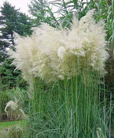 Gerbera, Dandelion, Pergola, Flora, Home And Garden, Rose, Green, Outdoor, Gardening