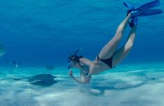 Welcome to Stingray City! Cayman Islands Diving doesn't get much better than swimming with stingrays Stingrays, Cayman Islands, 50 Shades, Snorkeling, Diving, 50th, Swimming, Bikinis, Blog