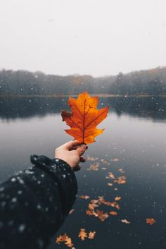 Fall is a time for reflection. As the leaves begin to change, we are reminded of the changes in our own lives. Here are five Fall poems we love! Thanksgiving Wallpaper, Happy Thanksgiving, Photography Camera, Nature Photography, Perspective Photography, Photography Ideas, Autumn Aesthetic, Blues, Autumn Cozy