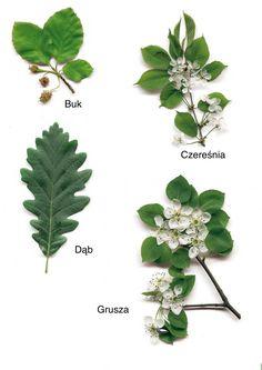 Jesienne liście - nazwy drzew Dzień Drzewa Jesień Święta i pory roku Wrzesień