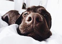 Dog And Puppies Memes .Dog And Puppies Memes Cute Puppies, Cute Dogs, Dogs And Puppies, Doggies, Animals And Pets, Baby Animals, Cute Animals, Dog Lady, Tier Fotos