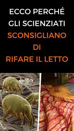 #letto #acari #scienza #casa #animanaturale