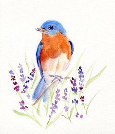 eastern bluebird watercolor