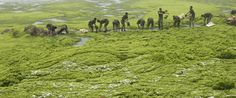 Disturbing Photos Show Why Algae Blooms Are A Growing Global Threat