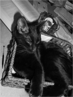 Kittens are cute and snuggly. They like to get into michief and fit into small boxes and baskets. Take a look at these wonderful black and white photos and tell me that you don't want a kitten. Buy this picture for your blog. Non-exclusive license available.