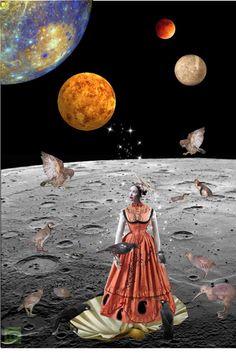 """Mercury dreams (New Zealand Birds)"" by caroline-cameron ❤ liked on Polyvore"