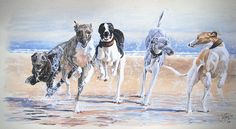 Dogs in Art has a number of works by Jo van Kampen for sales both online and in our gallery based in Stockbridge. We also feature other fine works of canine art and gifts. Greyhound Art, Italian Greyhound, Hound Breeds, Lurcher, Grey Hound Dog, Dog Runs, Dog Paintings, Watercolor Animals, Frames